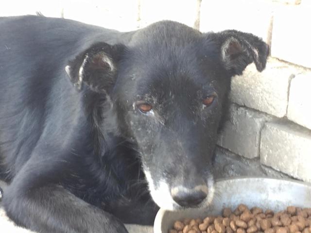 JUSTIN M-X labrador noir, taille moyenne, env. 25 kg, né 2013 Ex-Backa(BELLA)PRET/ BESOIN DE SOINS - Page 5 Justin20