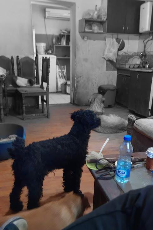 MOWGLI, M-X, taille petite, né 01.03.18 (BACKA /pension GORDANA) Amical petit loulou Mowgli14