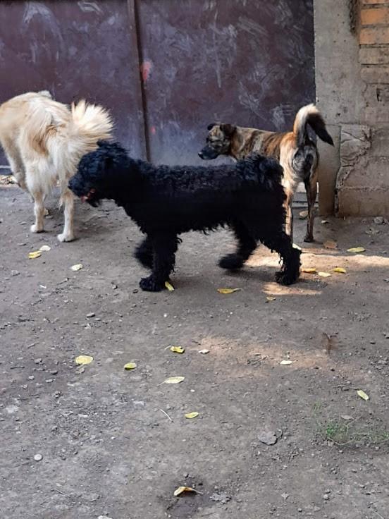 MOWGLI, M-X, taille petite, né 01.03.18 (BACKA /pension GORDANA) Amical petit loulou Mowgli24