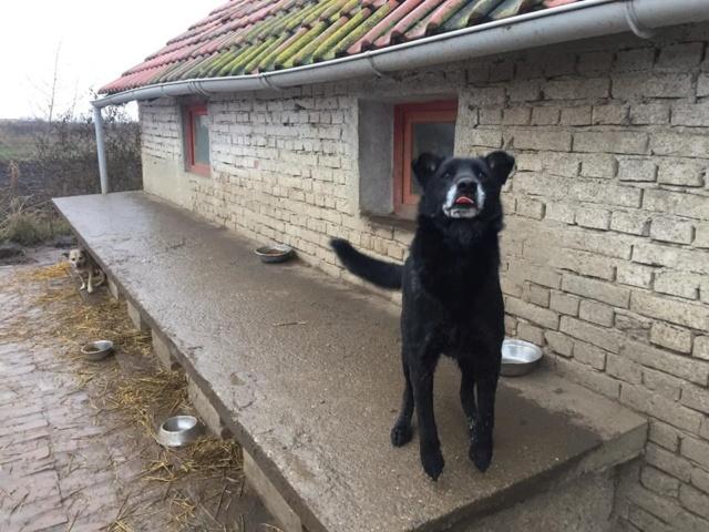 JUSTIN M-X labrador noir, taille moyenne, env. 25 kg, né 2013 Ex-Backa(BELLA)PRET/ BESOIN DE SOINS - Page 4 Siouxi12
