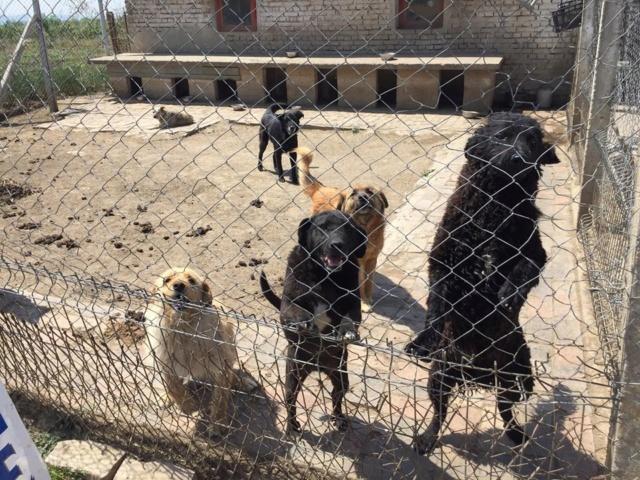 JUSTIN M-X labrador noir, taille moyenne, env. 25 kg, né 2013 Ex-Backa(BELLA)PRET/ BESOIN DE SOINS - Page 4 Siouxi17