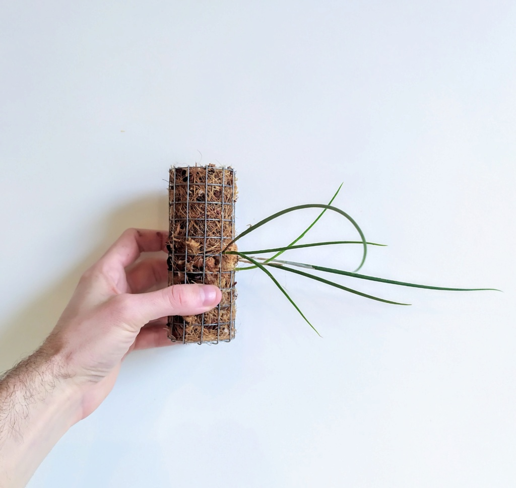 Bricolage support epiphyte 710