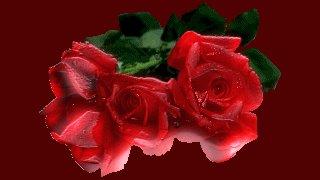 Gloria Salvi 50971810