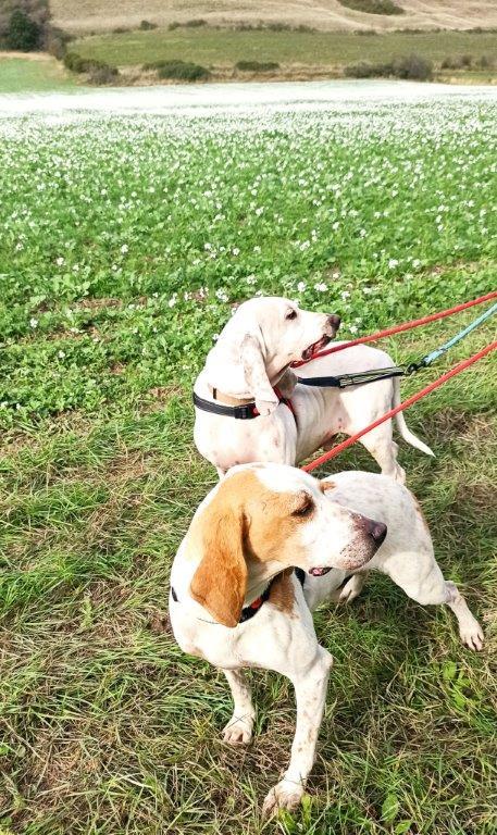 ABU (chien mâle croisé courant) Réservé  Abu_do13