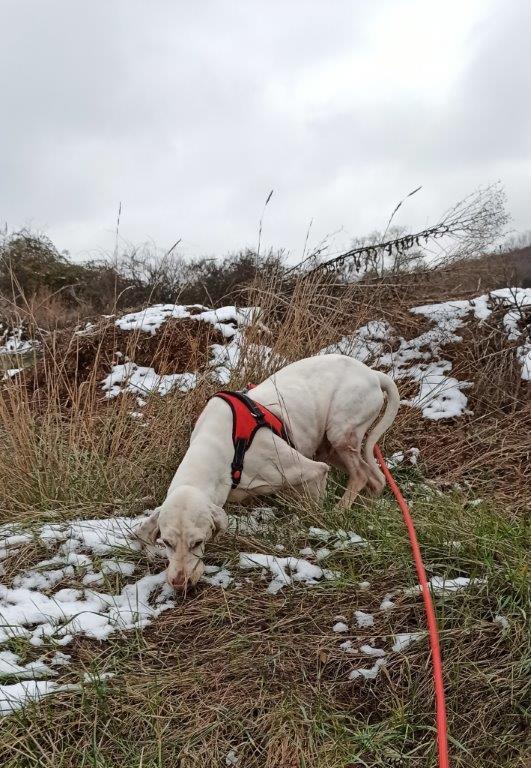 DOUDOU (chien mâle croisé courant) Réservé  Img_2022
