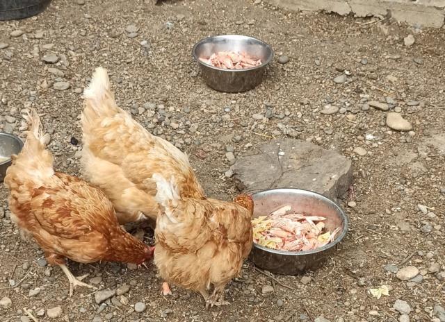 Des poules!! Img_2076