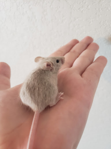 names for some of my mice? Dilute13