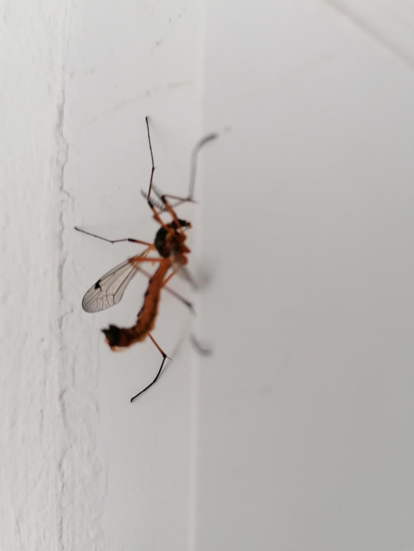 Identification insecte Img_2011