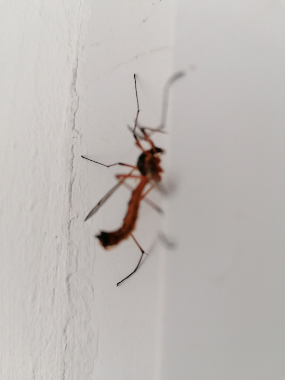 Identification insecte Img_2012