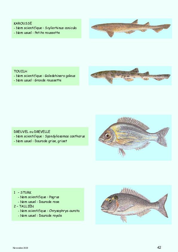 ichthyonymie bretonne noms des poissons et coquillages etc - Page 3 Small_10