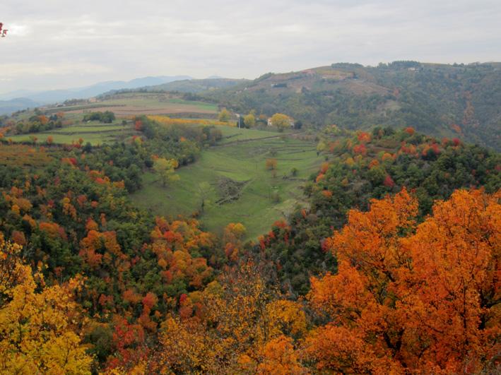 couleurs d'automne 11102910