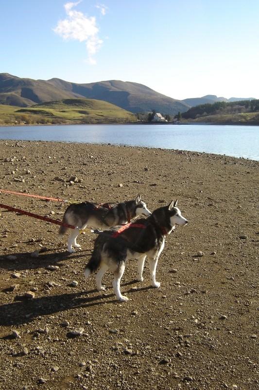 Puka et Chadka au Lac du Guéry 01_puk10