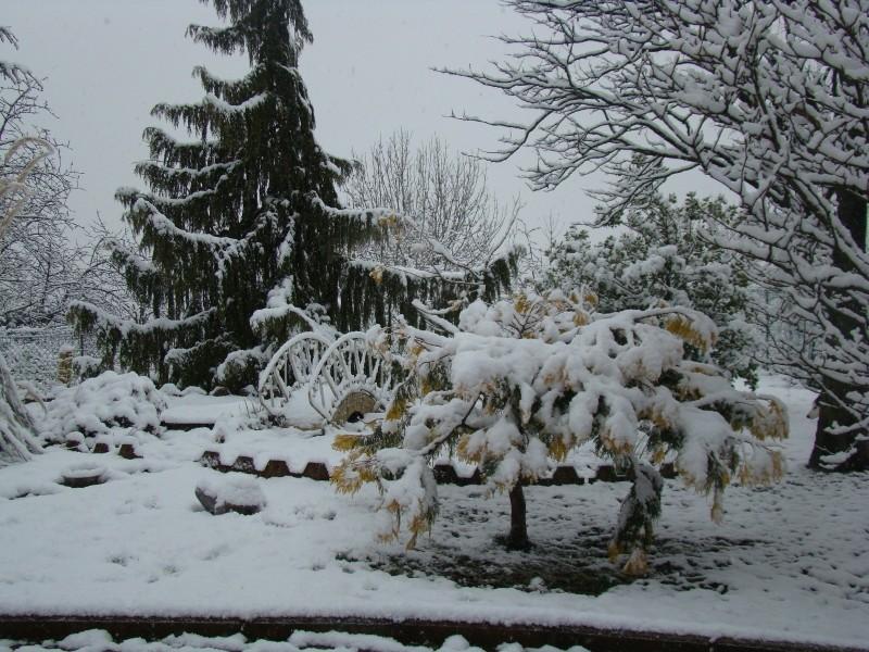 La neige est enfin là ! 02_bas11
