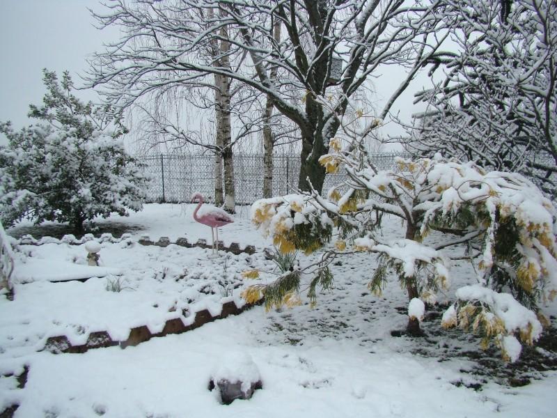 La neige est enfin là ! 08_bas11