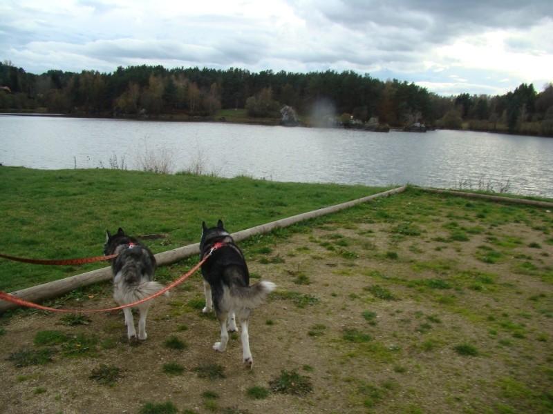 Puka et Chadka au Lac de la Cassière 11_3_n10