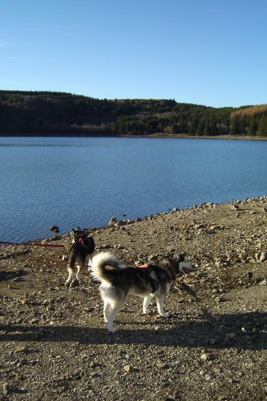 Puka et Chadka au Lac du Guéry 12_puk10