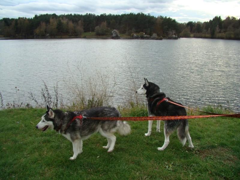 Puka et Chadka au Lac de la Cassière 12_puk14