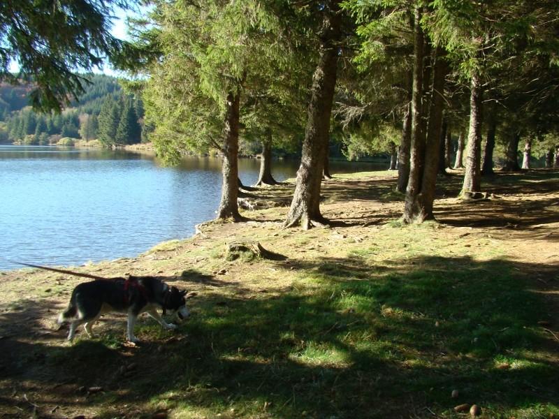 Puka et Chadka au Lac du Guéry 15_lac13