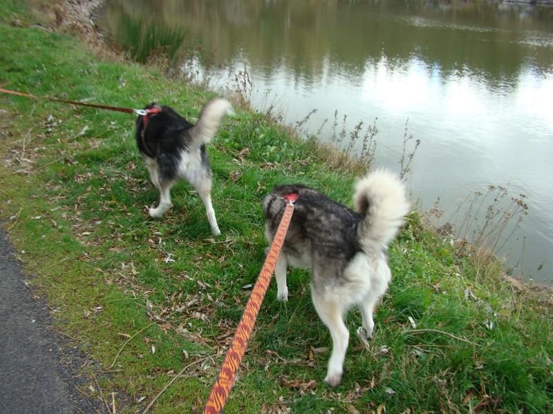 Puka et Chadka au Lac de la Cassière 18_puk10