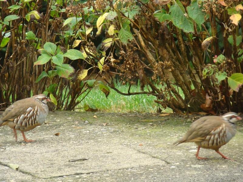 Visite ce matin dans mon jardin 20_27_10