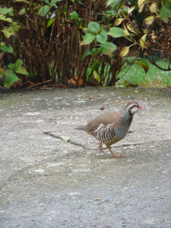 Visite ce matin dans mon jardin 21_27_10