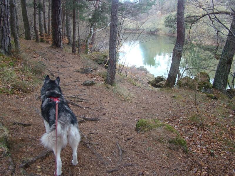 Puka et Chadka au Lac de la Cassière 22_cha10