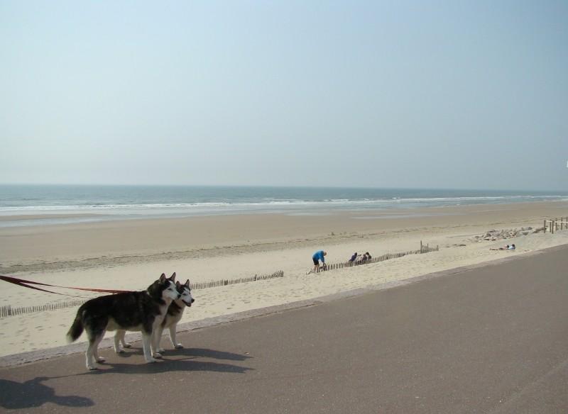 De la Normandie au Nord 40_har10