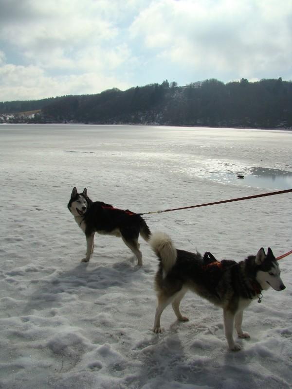 Puka et Chadka au Lac du Guéry Dsc06221