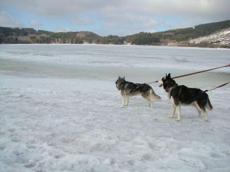 Puka et Chadka au Lac du Guéry Dsc06226