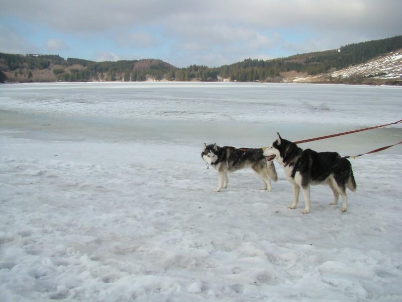 Puka et Chadka au Lac du Guéry Dsc06227