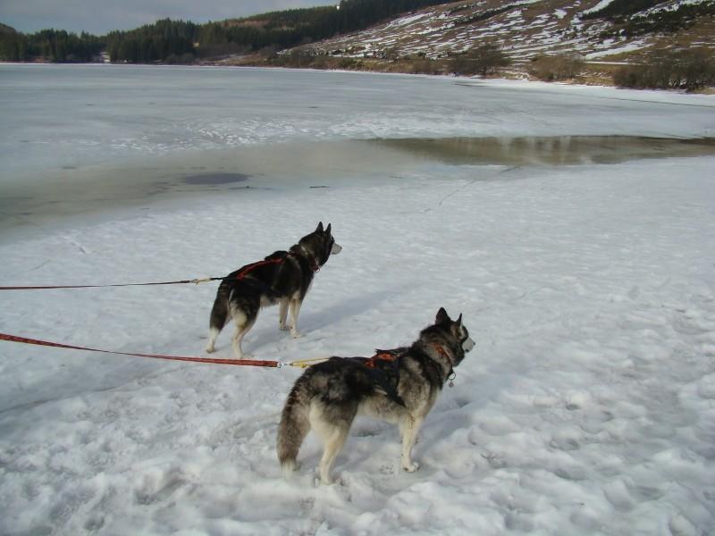 Puka et Chadka au Lac du Guéry Dsc06230