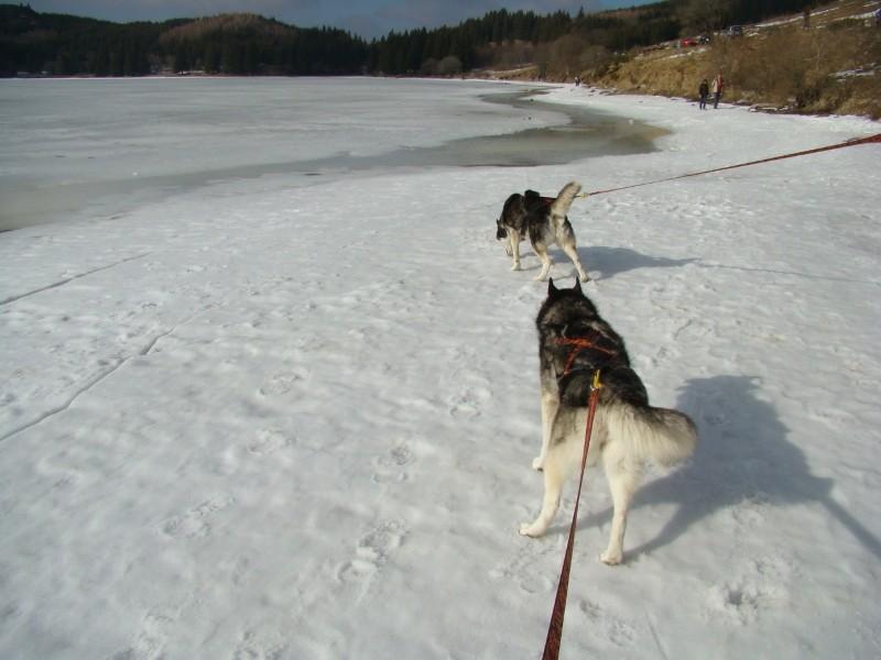 Puka et Chadka au Lac du Guéry Dsc06231