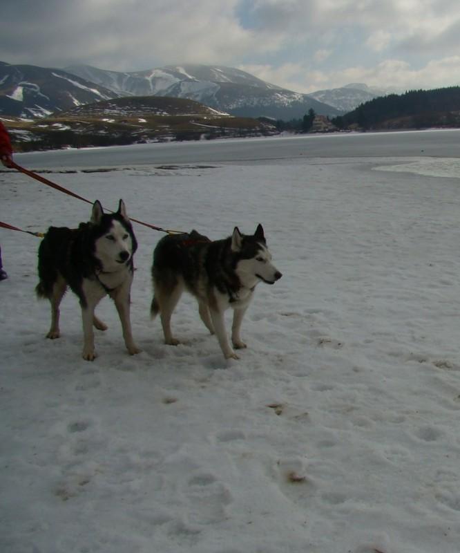 Puka et Chadka au Lac du Guéry Dsc06232