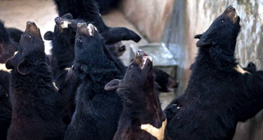Sauvons les ours Ours11
