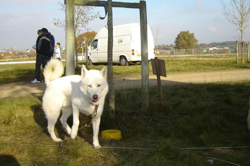 Attelage 2 chiens perdu à CUVERY (01) RETROUVES Valco_10
