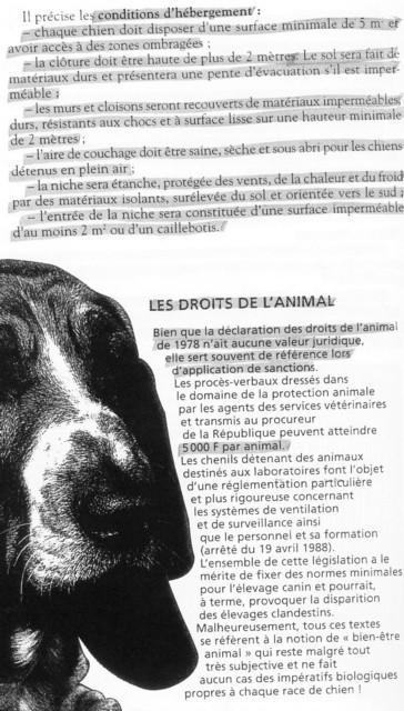 installations + de 9 chiens et certificat de capacité Sans_t18