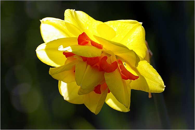 Fleurs ... tout simplement - Page 4 Bri0610