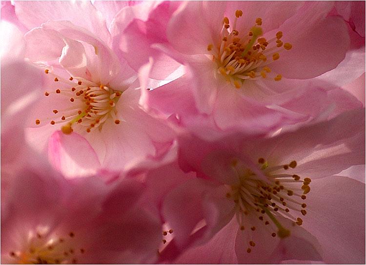 Fleurs ... tout simplement - Page 3 Printe12
