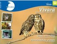 Inventarisatie Steenuil Vivara11
