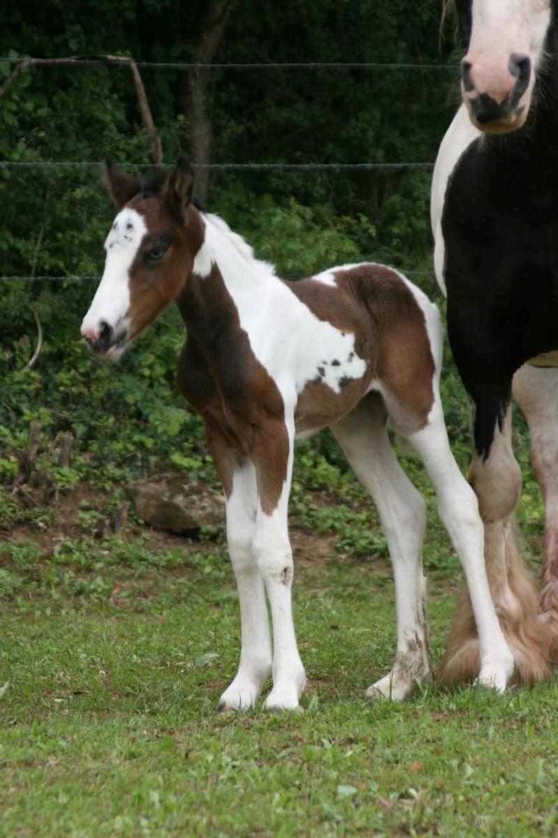 Nouvelle naissance au Gypsy de Lorraine photos P2 et 3 RESERVEE Newws_13