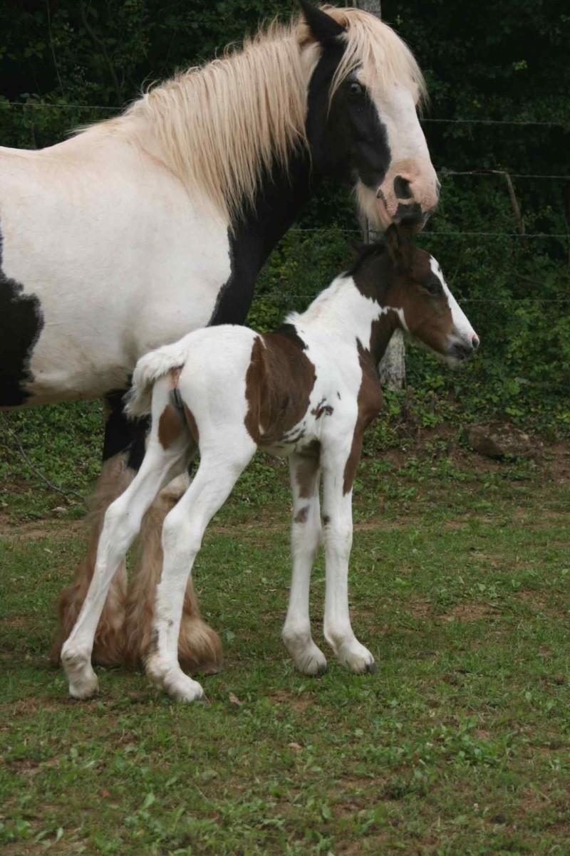 Nouvelle naissance au Gypsy de Lorraine photos P2 et 3 RESERVEE Newws_16