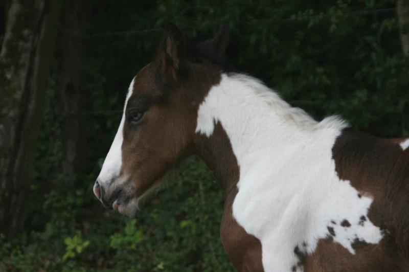 Nouvelle naissance au Gypsy de Lorraine photos P2 et 3 RESERVEE Newws_17