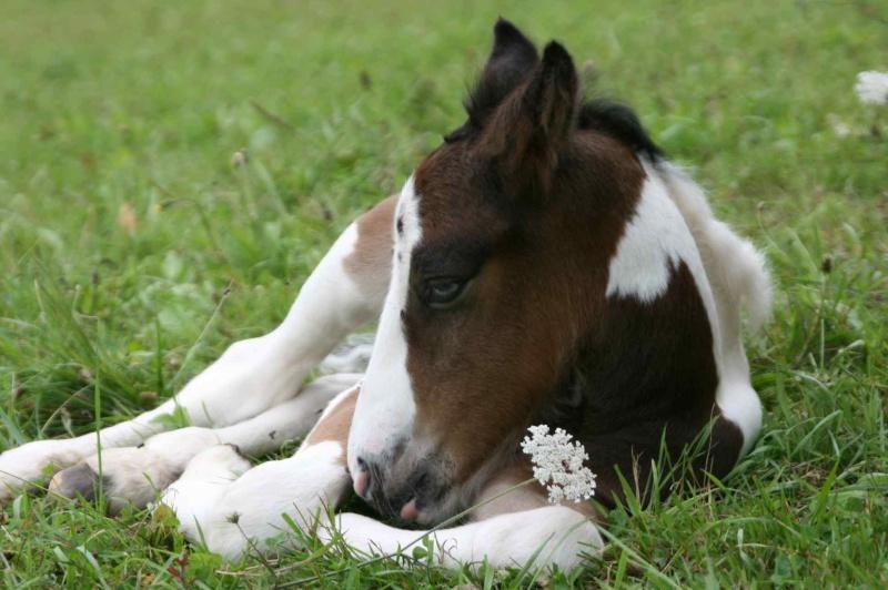 Nouvelle naissance au Gypsy de Lorraine photos P2 et 3 RESERVEE Newws_20