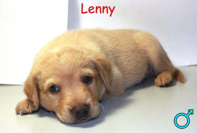 14 CHIOTS X berger A SAUVER AVANT LE 28 AOUT !!! ADOPTES Lenny10