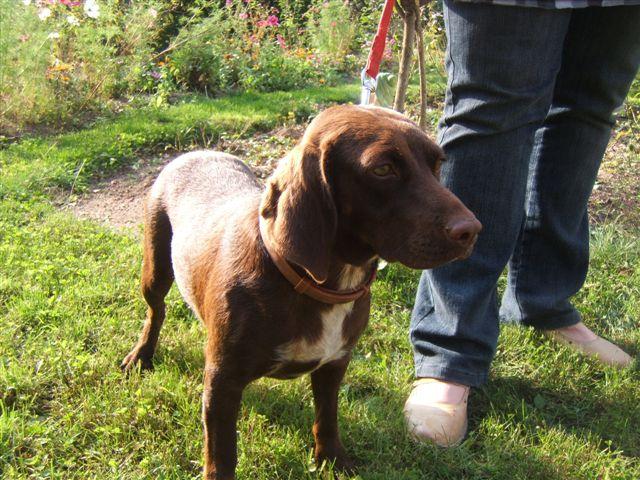 Lilou petite chienne au grand coeur en FA chez mitsu sous asso PAN (ADOPTEE) Lilou410