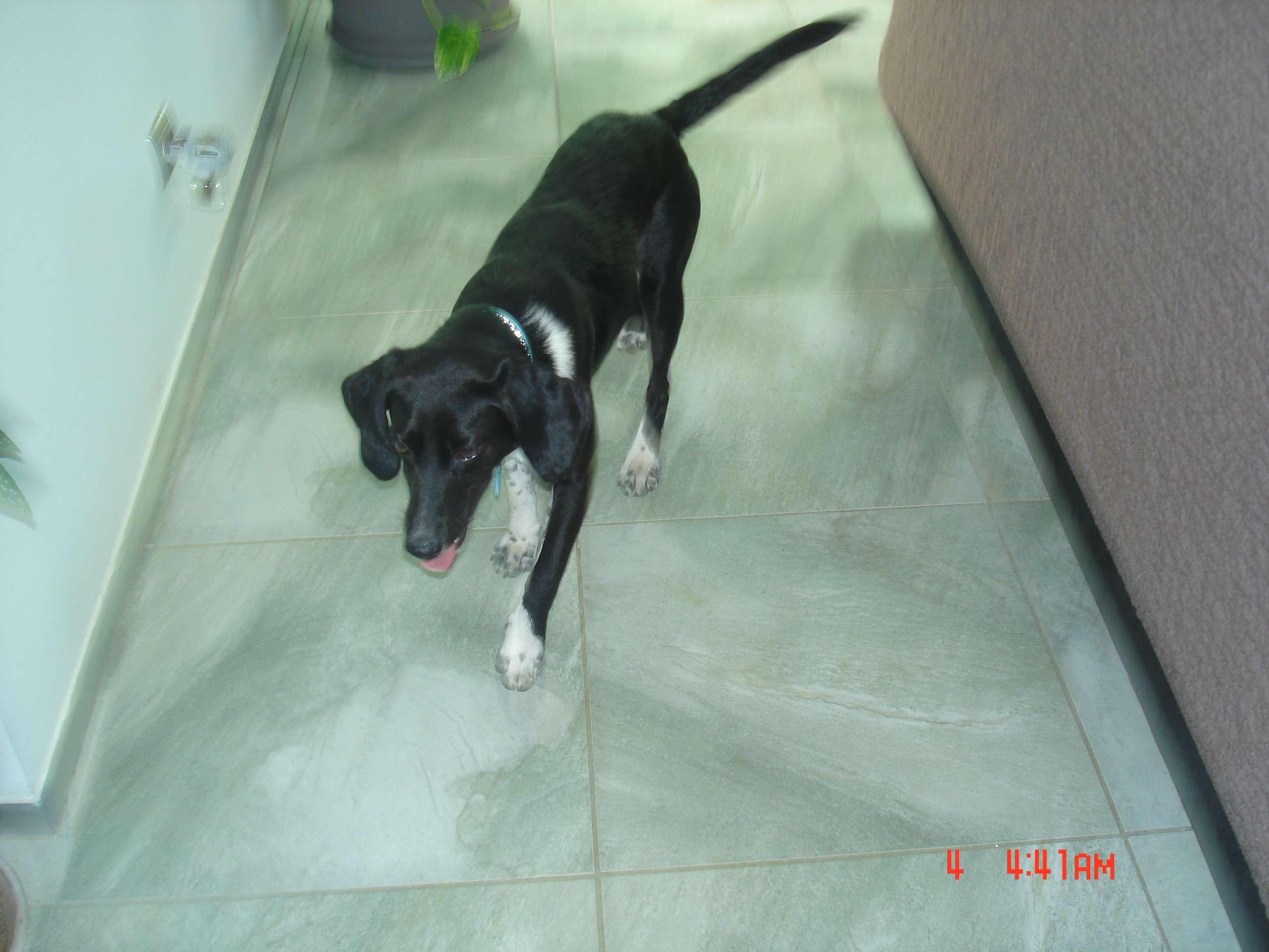 Emma petite chienne sur Porto Polo adoptée par FA Photos13