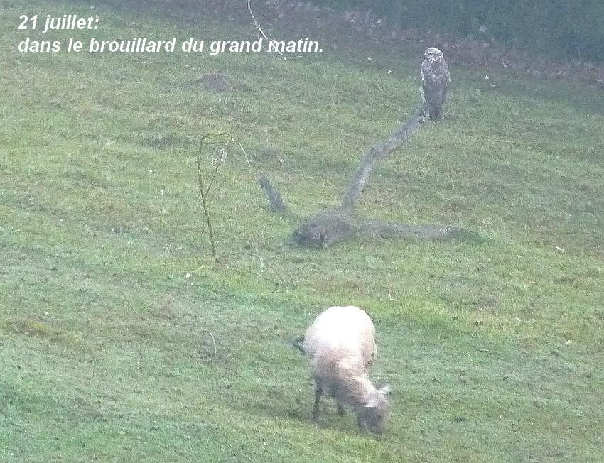 2011: La bio-diversité dans mon jardin.... oiseaux, mouotns, nénuphars. - Page 3 00113