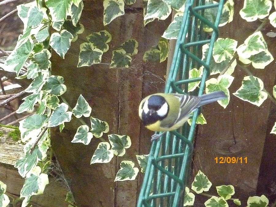 2011: La bio-diversité dans mon jardin.... oiseaux, mouotns, nénuphars. - Page 4 00129