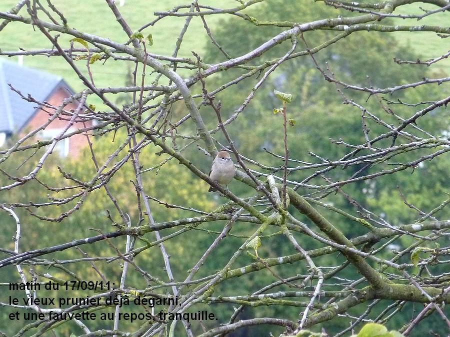 2011: La bio-diversité dans mon jardin.... oiseaux, mouotns, nénuphars. - Page 4 00130