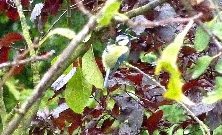 2011: La bio-diversité dans mon jardin.... oiseaux, mouotns, nénuphars. - Page 4 00235